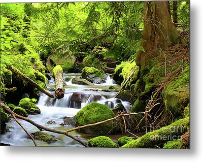 Mountain Stream In The Pacific Northwest Metal Print