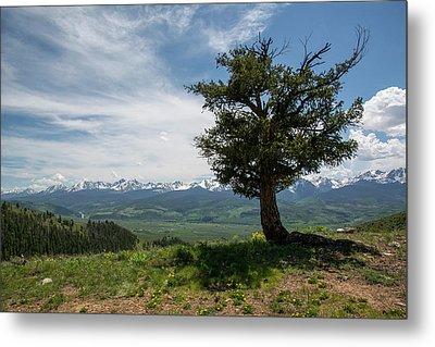 Mountain Tree Metal Print
