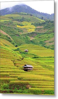 Mountainous Rice Field Metal Print by Akari Photography