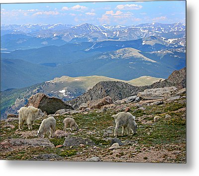 Mountains And Goats Metal Print