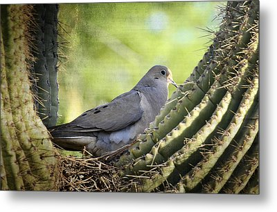 Mourning Dove In The Morning  Metal Print by Saija  Lehtonen