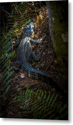 Mr Alley Gator Metal Print by Marvin Spates