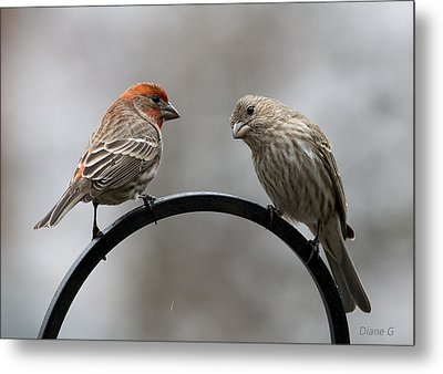 Mr. And Mrs. House Finch Metal Print by Diane Giurco