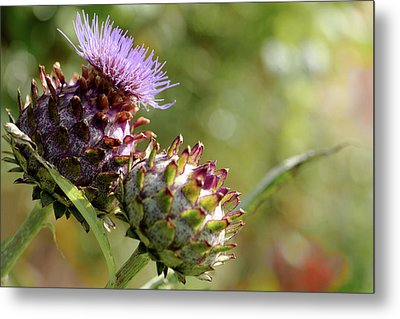 Mr And Mrs Thistle  Metal Print