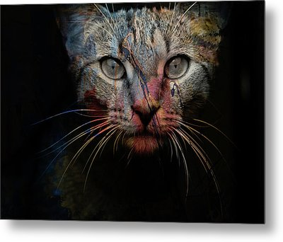 Mr Bo Metal Print by Paul Lovering