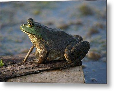 Mr. Bullfrog Metal Print