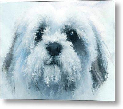 Mr. Cool - Impressionist Shih Tzu Dog Portrait Metal Print by Rayanda Arts