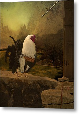 Mr Rooster Metal Print by Jeff Burgess