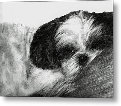 Metal Print featuring the drawing Mr Tibbs by Meagan  Visser