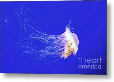 Metal Print featuring the photograph Mr.jelly by Vanessa Palomino