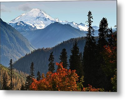 Mt Baker From The Yellow Aster Trail Metal Print by Alvin Kroon