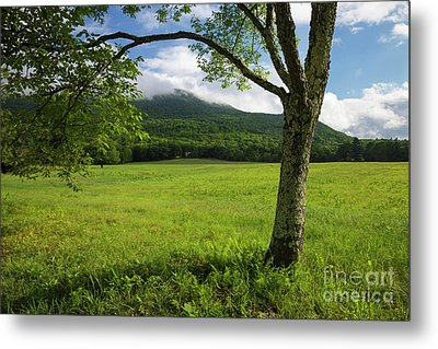 Mt Israel - Sandwich, New Hampshire Metal Print by Erin Paul Donovan