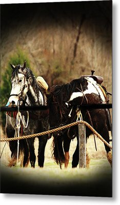 Much Needed Rest Metal Print by Kim Henderson