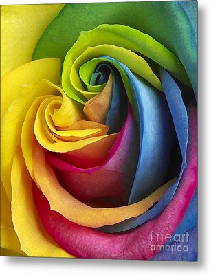 Rainbow Rose Metal Print