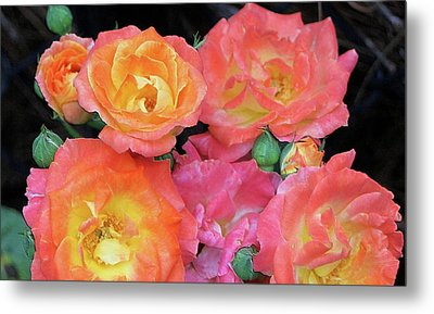 Multi-color Roses Metal Print by Jerry Battle