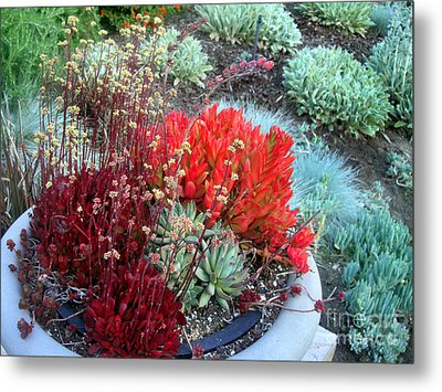 Multi Color Succulents And Other Plants Metal Print by Sofia Metal Queen