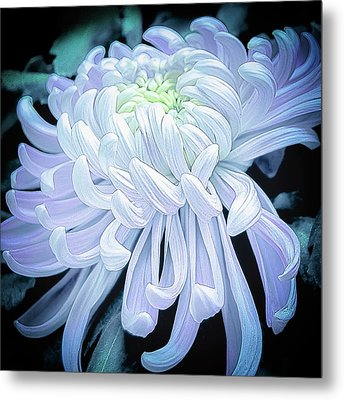 Mum In White Metal Print by Julie Palencia