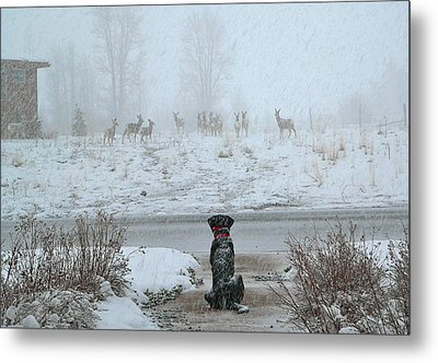 Murphy Watches The Deer Metal Print by Eric Tressler