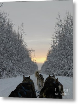 Mushing Into The Sunset Metal Print by Tanja Hymel