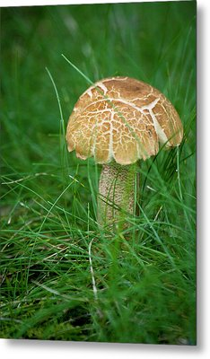 Mushroom In The Grass Metal Print by Teresa Mucha