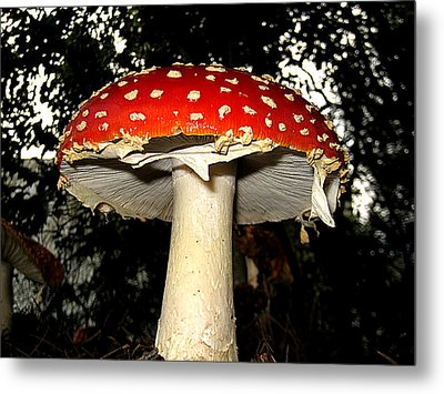 Metal Print featuring the photograph Mushroom by John King