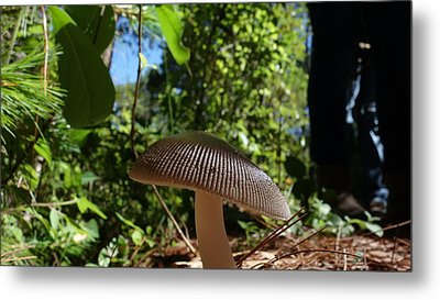 Metal Print featuring the photograph Mushroom by Matthew Bamberg
