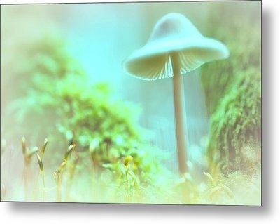 Metal Print featuring the photograph Mushroom Misty Dreams, Mycena Galericulata by Dirk Ercken