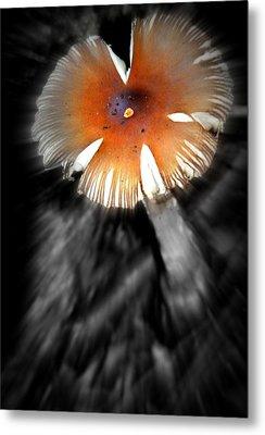 Mushroom Metal Print by Rick DiGiammarino