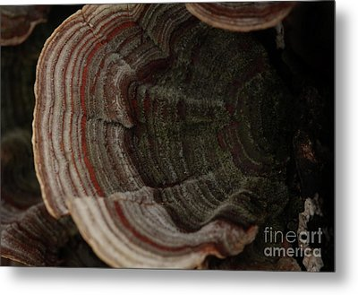 Metal Print featuring the photograph Mushroom Shells by Kim Henderson