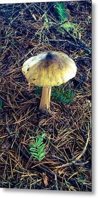 Mushrooms Of Oregon Metal Print