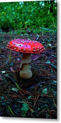 Mushrooms Of Oregon II Metal Print