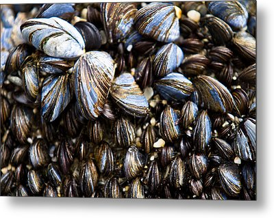 Metal Print featuring the photograph Mussels by Justin Albrecht