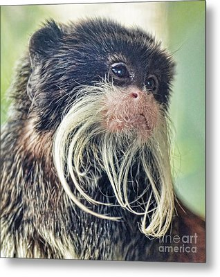Mustache Monkey Watching His Friends At Play Metal Print