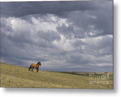 Mustang And Stormy Sky Metal Print by Jean-Louis Klein & Marie-Luce Hubert