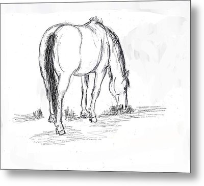 Mustang Mare Field Sketch Metal Print by Dawn Senior-Trask
