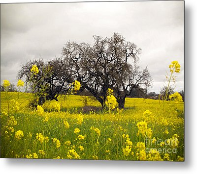 Metal Print featuring the photograph Mustard And Oaks by Leslie Hunziker