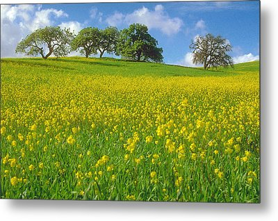 Metal Print featuring the photograph Mustard Field by Mark Greenberg