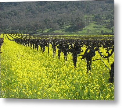 Metal Print featuring the photograph Mustard Flowers by Kim Pascu