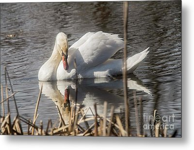 Metal Print featuring the photograph Mute Swan - 3 by David Bearden