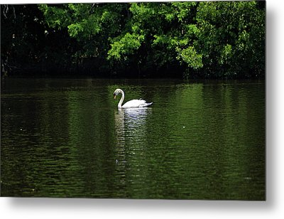 Metal Print featuring the photograph Mute Swan by Sandy Keeton