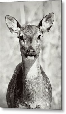 Metal Print featuring the photograph My Dear by Jessica Brawley