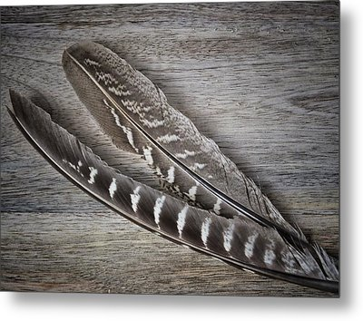 Metal Print featuring the photograph My Fabulous Feathery Find. by Karen Stahlros