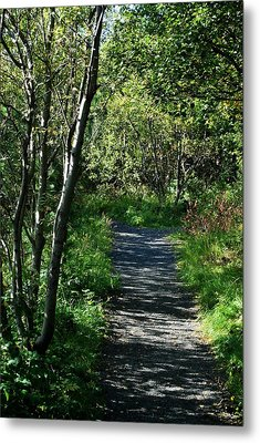 Metal Print featuring the photograph My Favorite Path by Marilynne Bull