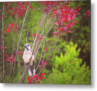 My First Summer Metal Print by Karen Cook