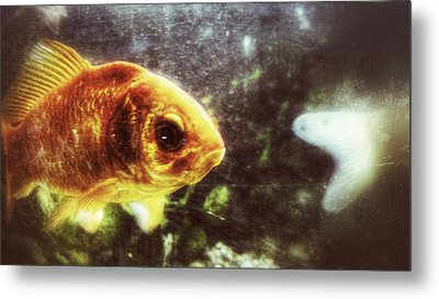 Metal Print featuring the photograph My Littlest Fish by Isabella F Abbie Shores FRSA
