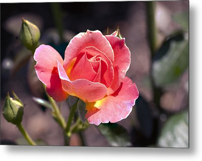 My Rose Metal Print by Don  Wright