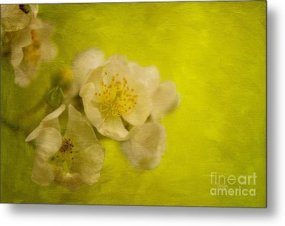 My Sweet Wild Rose Metal Print by Lois Bryan