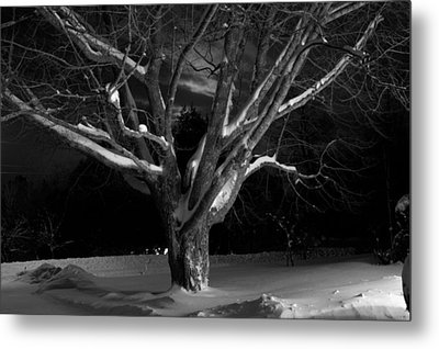 Metal Print featuring the photograph My Tree by Greg DeBeck