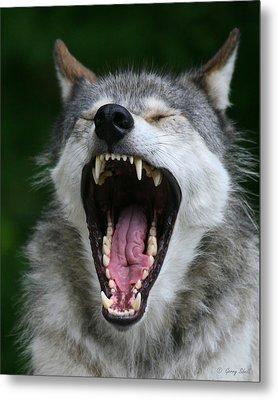 My What Big Teeth You Have Grandma Metal Print by Gerry Sibell