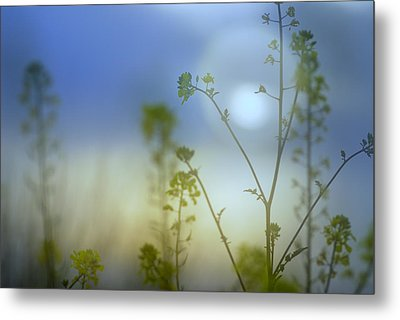 Mysterious Forest At Dusk Blue Metal Print by Guido Montanes Castillo